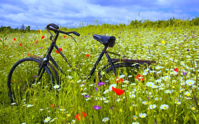 flowers-widescreen-wallpaper-bicycle-fragrant-wallpapers-image-wallwuzz-hd-wallpaper-18885