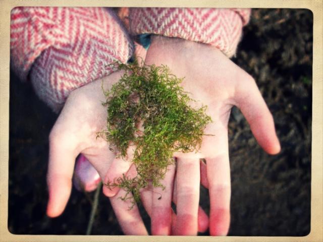 moss in hands